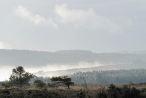Misty Woodbury Common