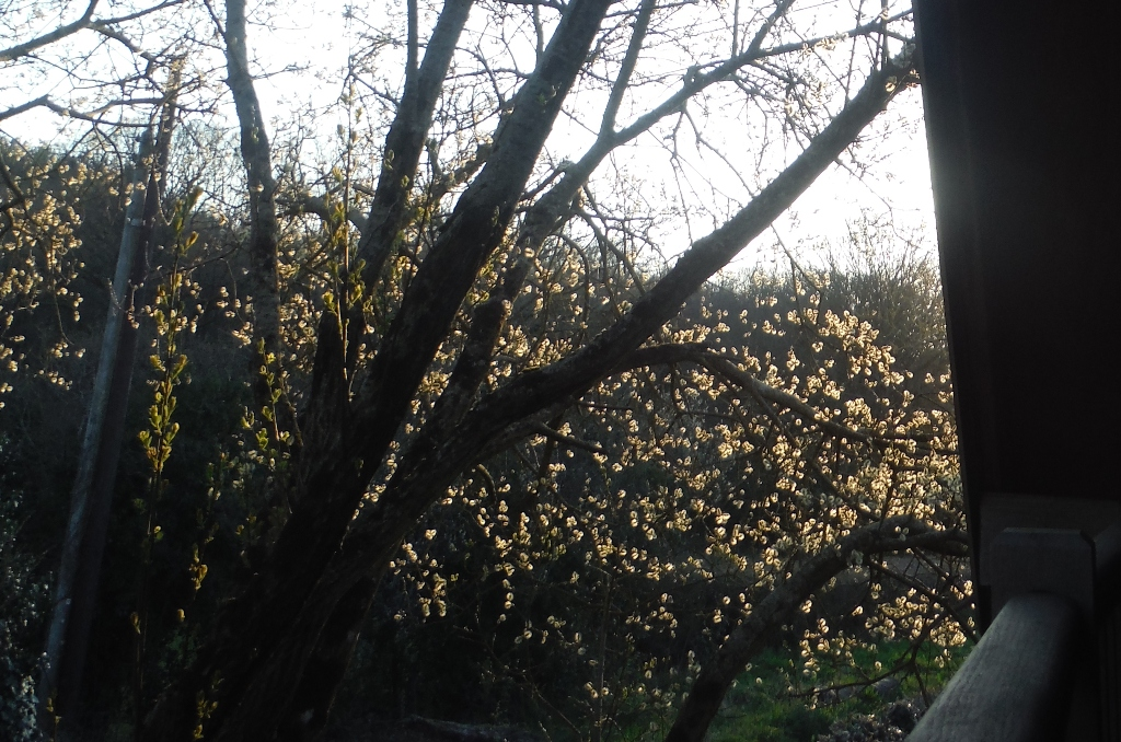 illuminated willow flowers